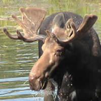 View the Moose Hunting Gallery